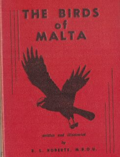 birds of malta