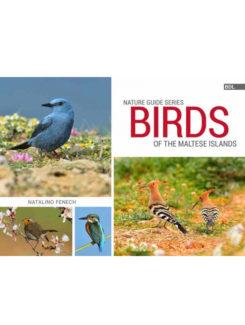 birds of the maltese islands